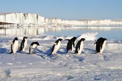 Reise Arktis