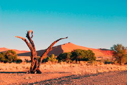 Reisen Südafrika